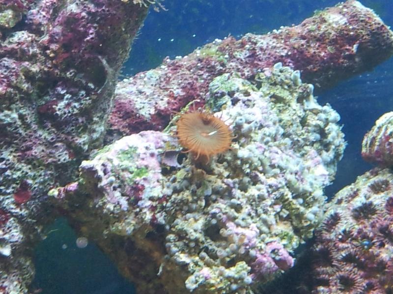 Aquarium de Samix  - Page 2 20130820