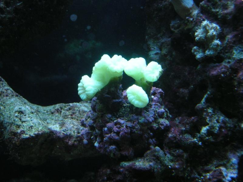 Aquarium de Samix  - Page 3 3510