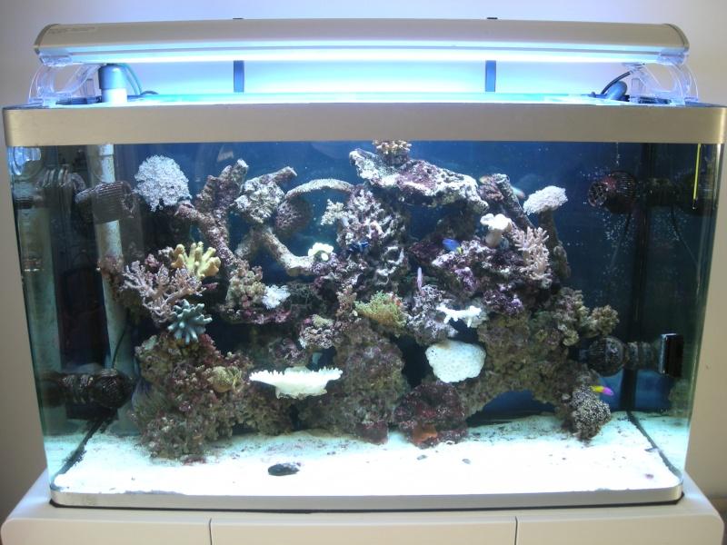 Aquarium de Samix  - Page 3 3910