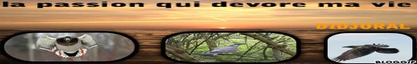 Numéro de plomb pour pigeon - Page 3 Bloggi16