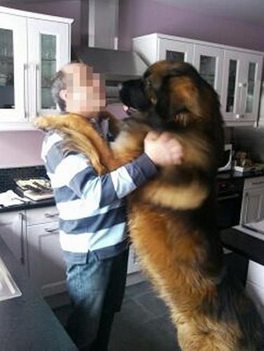 pensez à votre pauvre petit chien qui s'ennuie tout seul Graf_b10