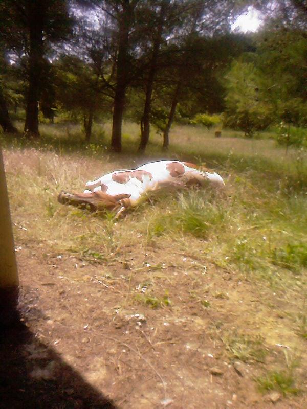 CONCOURS PHOTO : Les chevaux paresseux... 28510