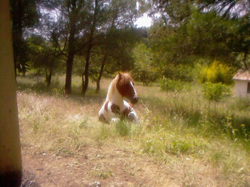 CONCOURS PHOTO : Les chevaux paresseux... 28910