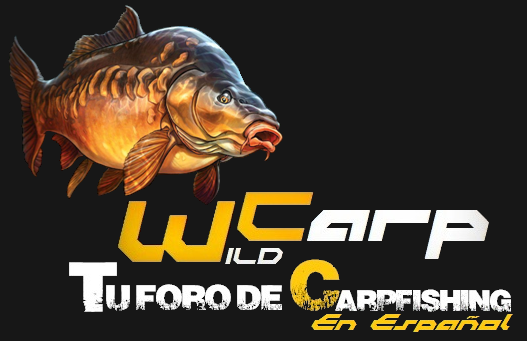 Wild Carp