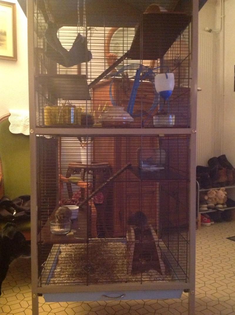 Nouvelle cage Image15
