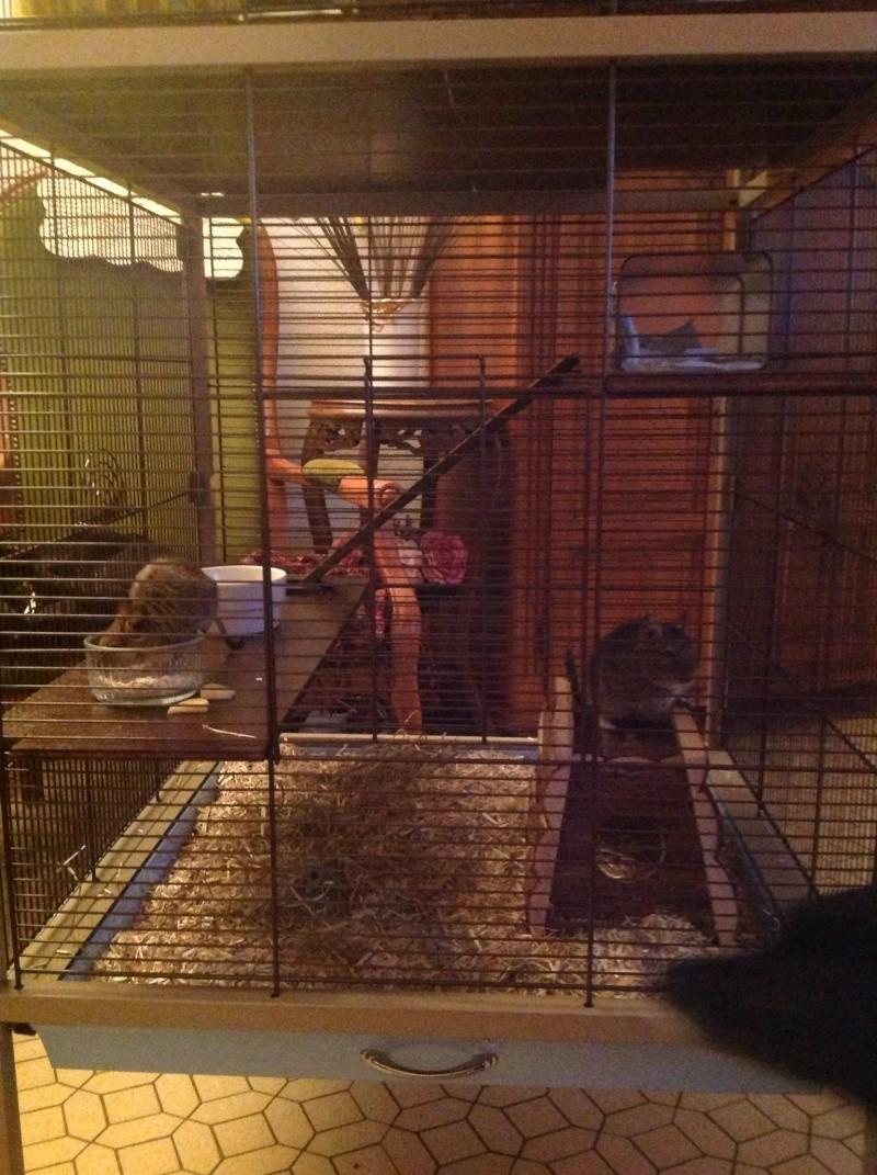 Nouvelle cage Image16