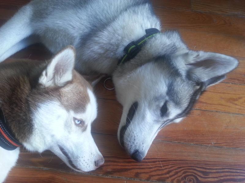 Loki et Gaïa 20130711