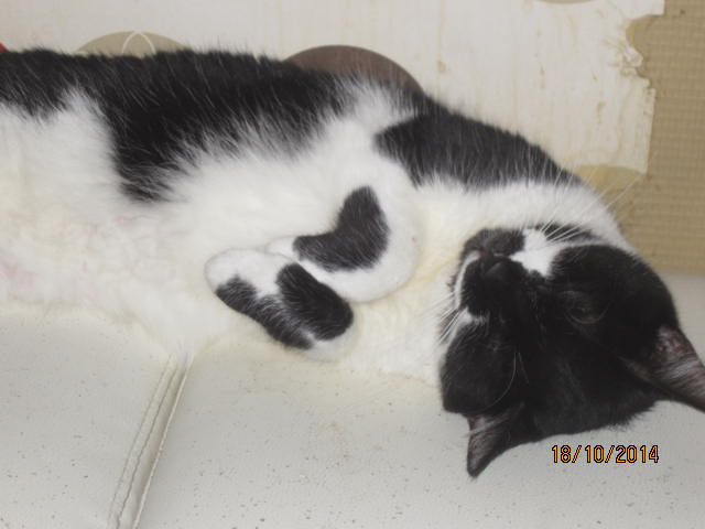 Lolita -  noire et blanche née en 2012 Img_0211