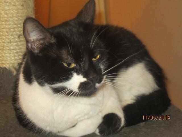 Lolita -  noire et blanche née en 2012 Img_8111