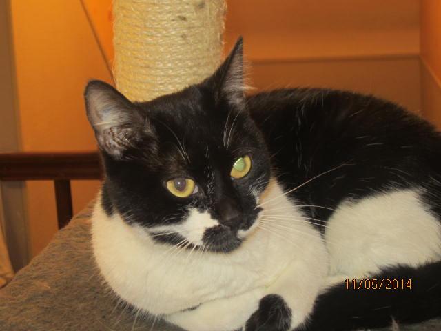 Lolita -  noire et blanche née en 2012 Img_8112