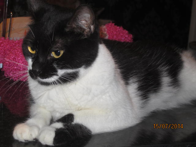 Lolita -  noire et blanche née en 2012 Img_8910