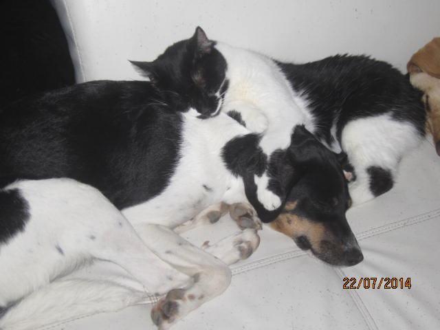 Lolita -  noire et blanche née en 2012 Img_9011