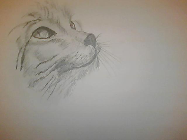 Mes dessins, repro et autres... Pictur15