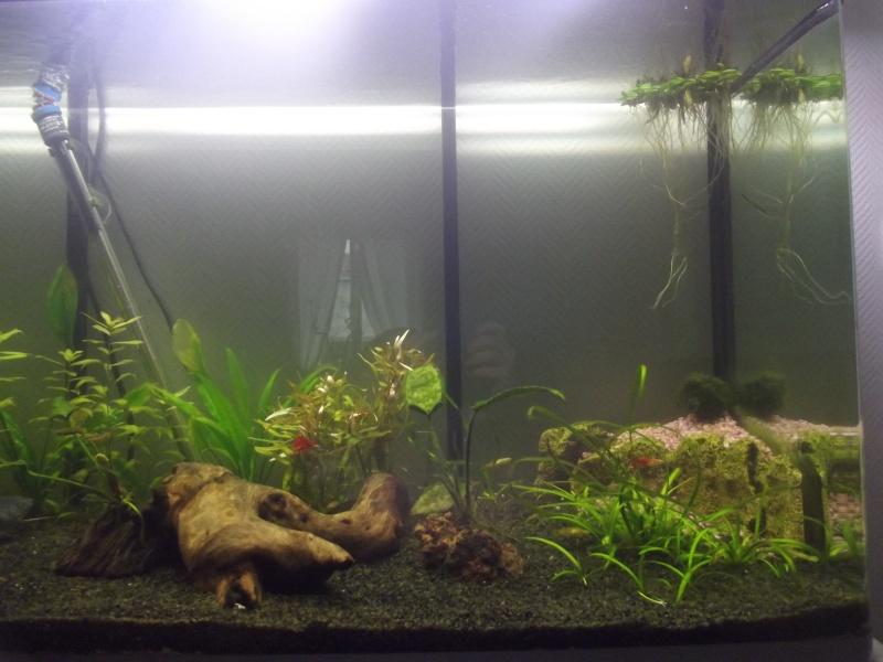 aqua 300L biotope asie du sud est Dscf2813