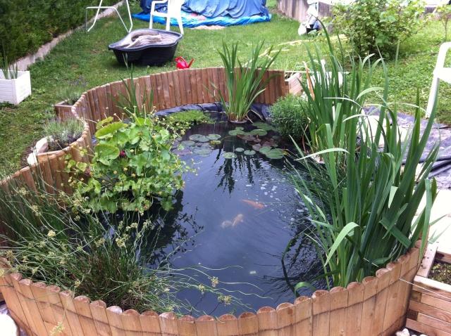 mon bassin sur la terrase pour boire un verre au pres des carpe koii B_110