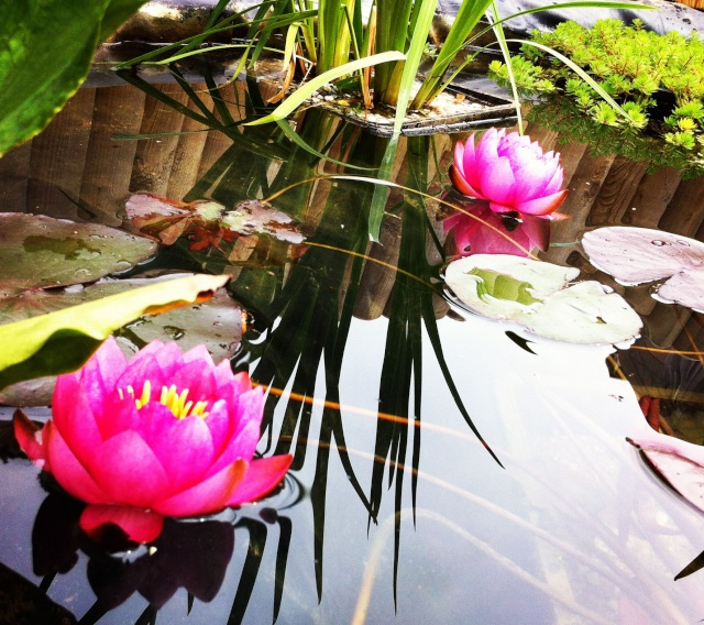 mon bassin sur la terrase pour boire un verre au pres des carpe koii B_2_210