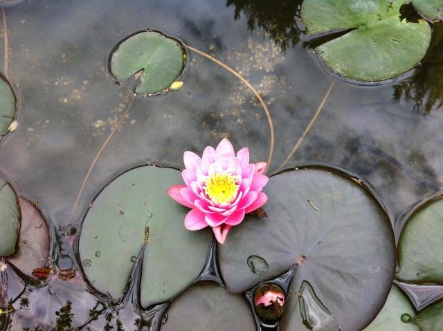 mon bassin sur la terrase pour boire un verre au pres des carpe koii B_310