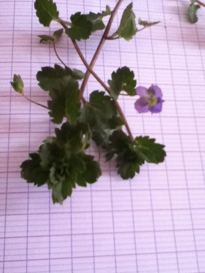 Bonne ou pas ? Plante15