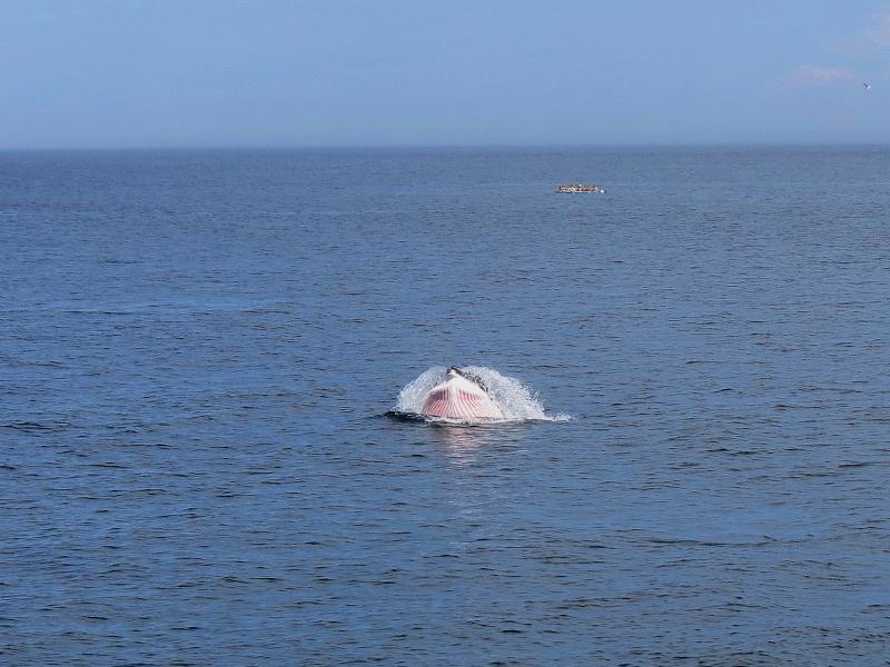 Baleines aux Bergeronnes Img_7812