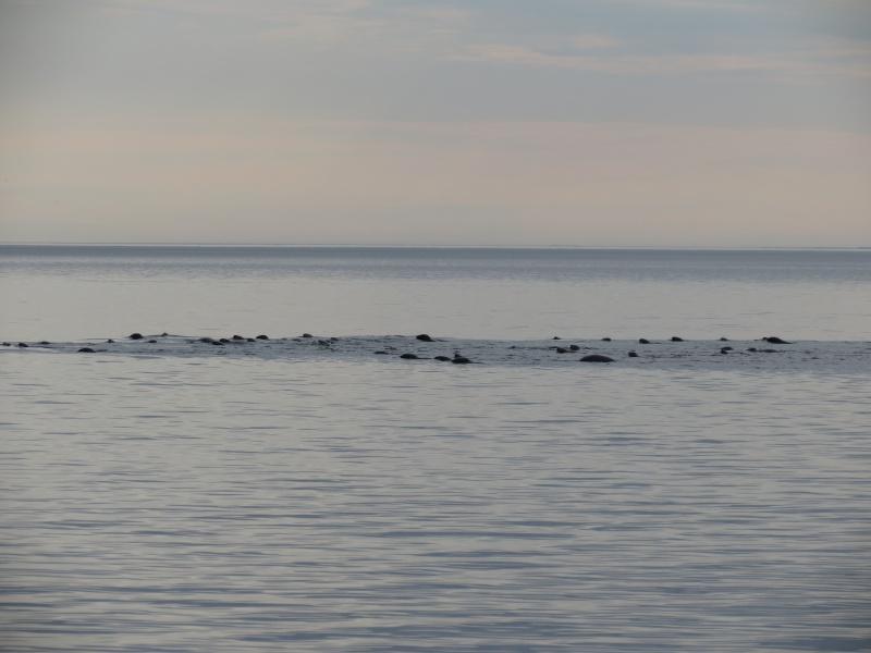 Baleines aux Bergeronnes Img_8010