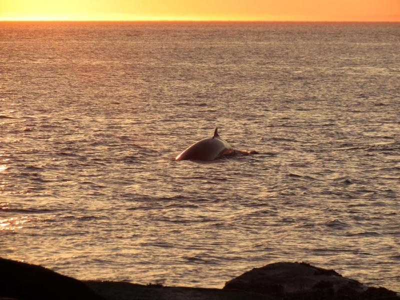 Baleines aux Bergeronnes Img_8110