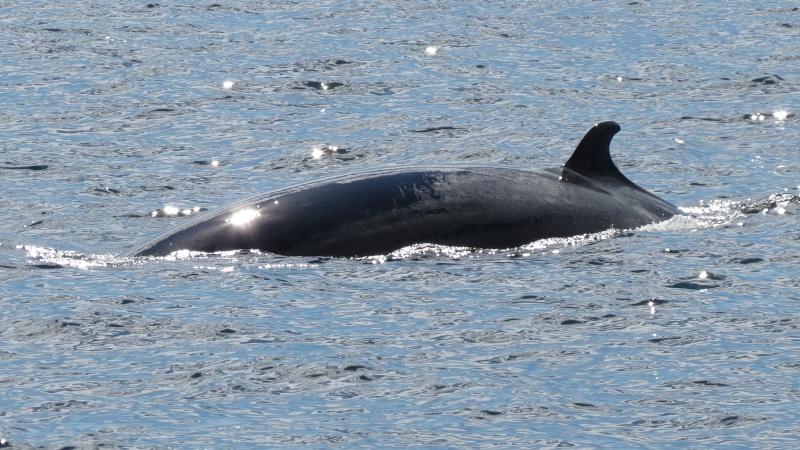 Baleines aux Bergeronnes Img_8211