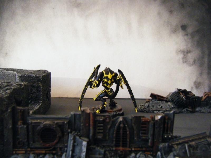 Flotte-ruche WASP Dscf6416