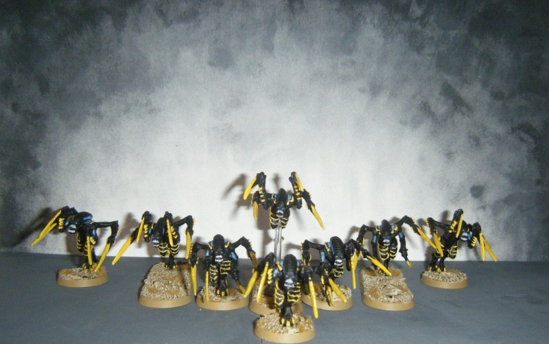 Flotte-ruche WASP Dscf8119