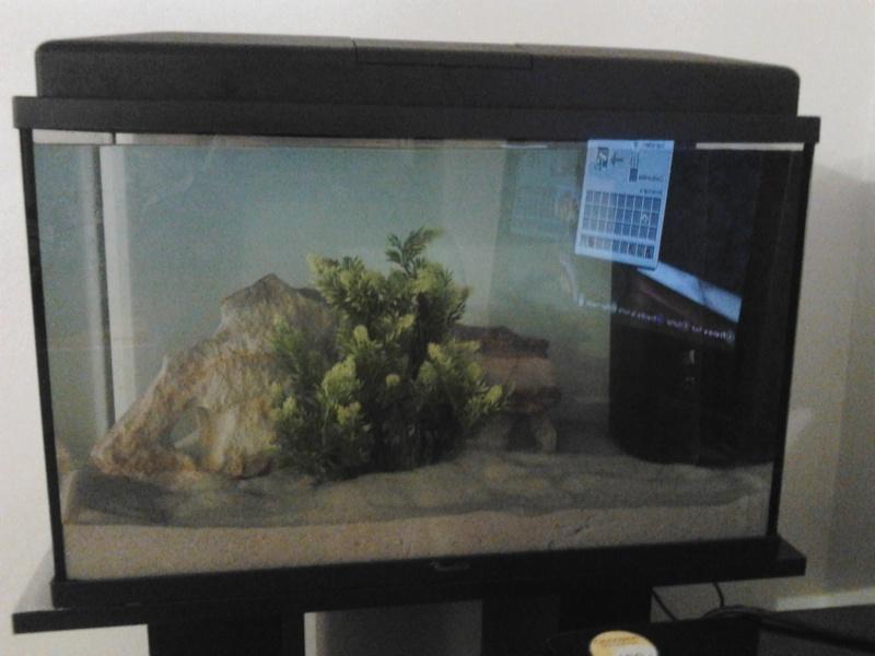 Mon nouvel aqua pour mes poissons  Photo019
