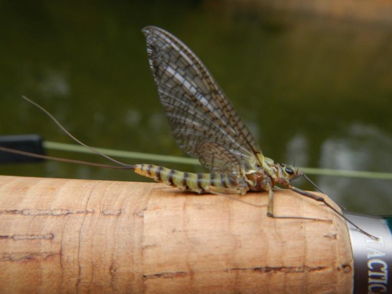 Photos d'insectes  Dscn0228