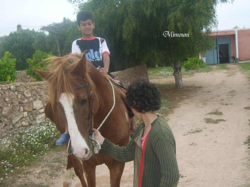 الميموني -   الميموني  في رحاب قرية أولاد ميمون Mimou144
