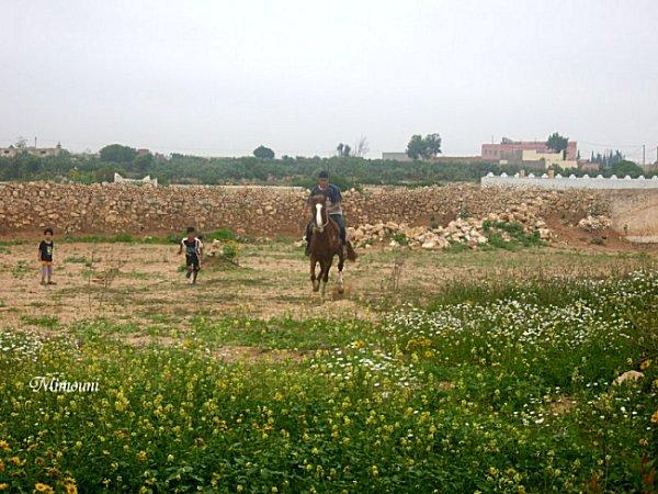 الميموني -   الميموني  في رحاب قرية أولاد ميمون Mimou146