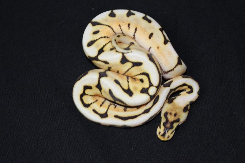 Quelques Snakes... 10477510