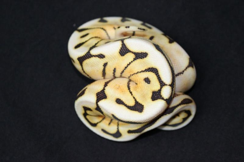 Quelques Snakes... 10630510