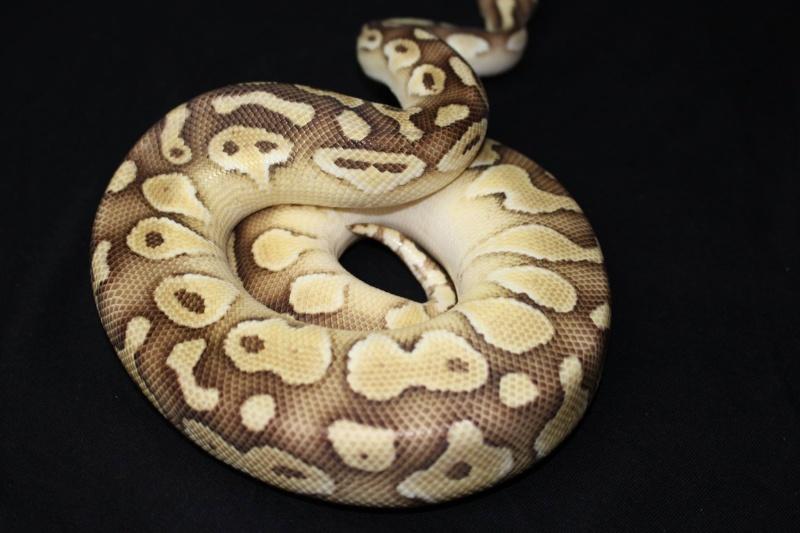 Quelques Snakes... 10714410