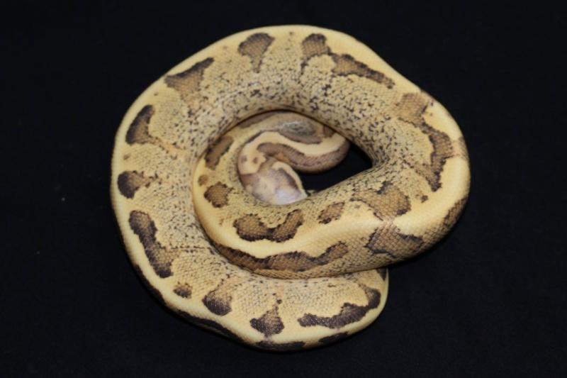 Quelques Snakes... 10733710