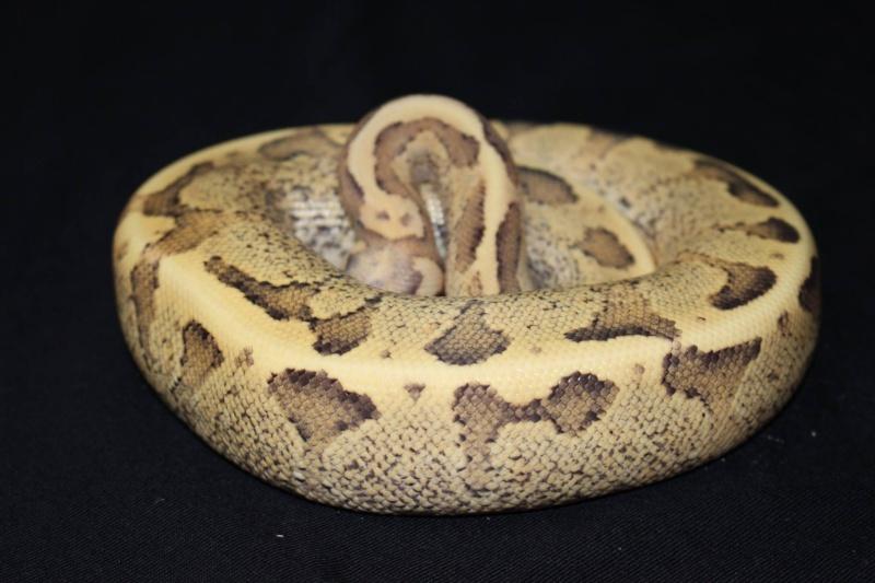 Quelques Snakes... 12740710