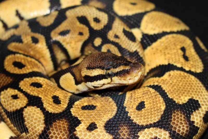 Quelques Snakes... 16143410