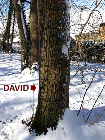 L'Énergie des arbres David10