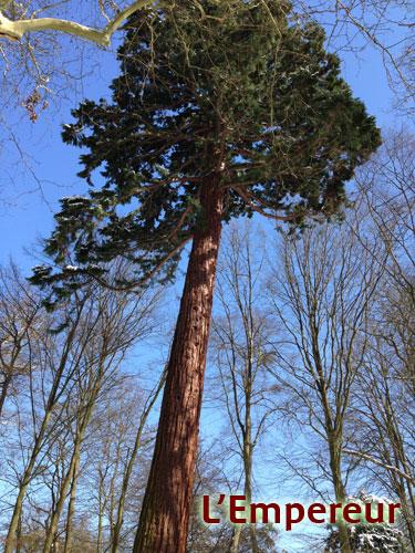L'Énergie des arbres Empere10