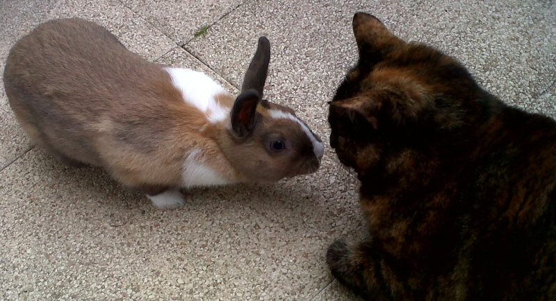 Elinda (lili) et Gaston (le lapin) Img-2013