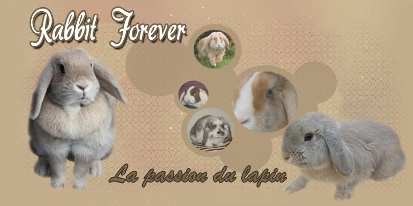 Rabbit Forever