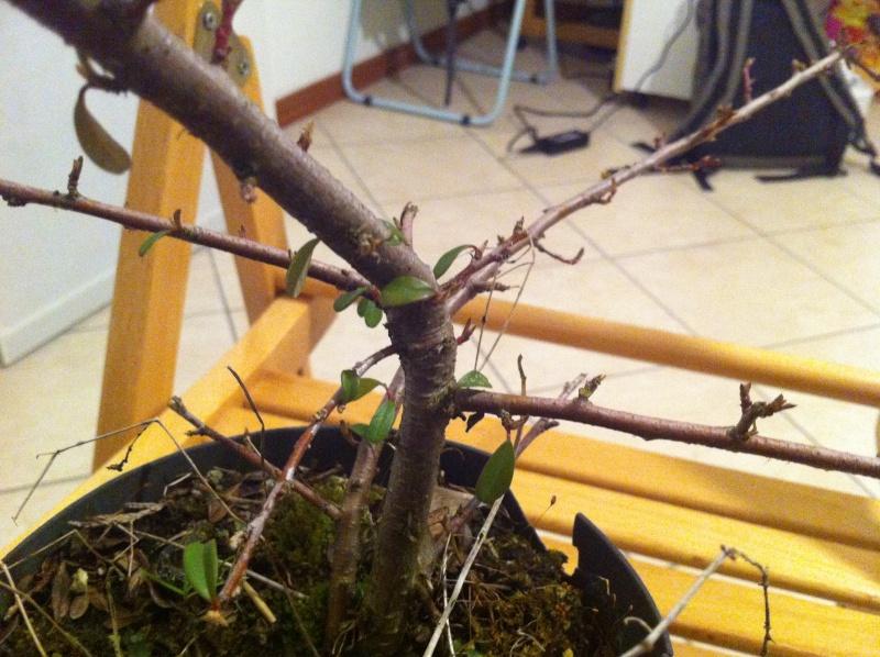 scelta bonsai 01710