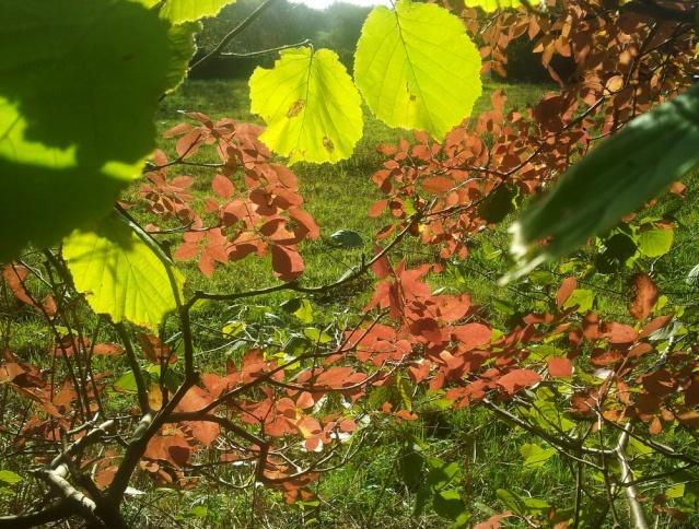l'automne arrive... - Page 4 Fraxin10
