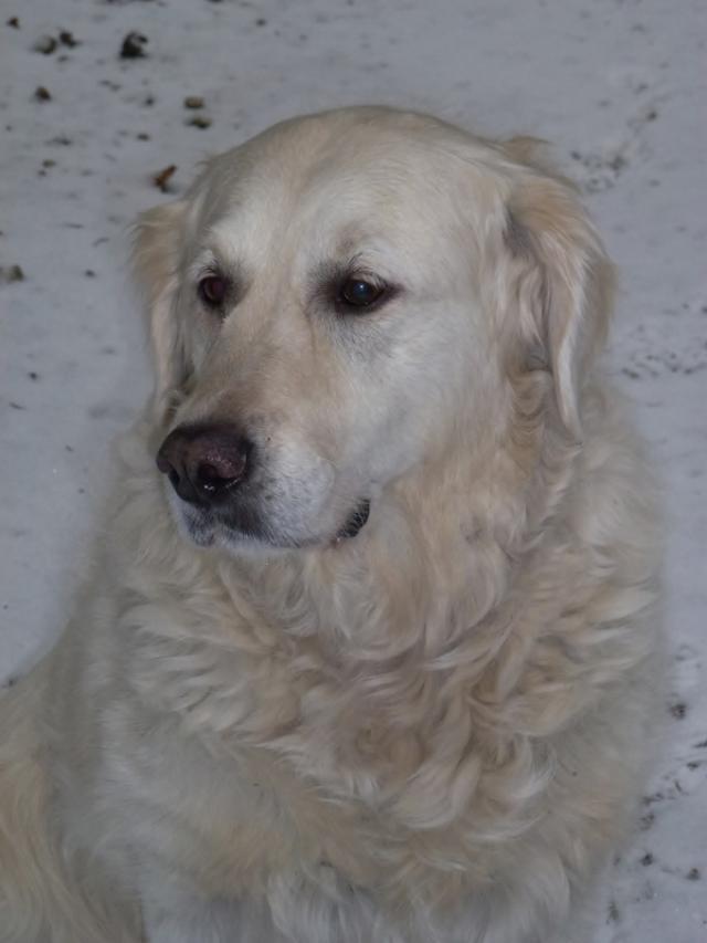 Qu'elle est le nom de vos/votre chien? Et Pourquoi? - Page 4 Bianca13