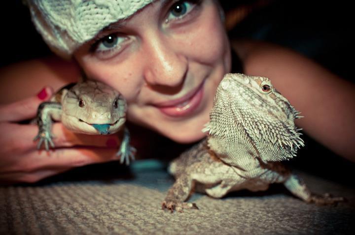 Should reptiles be kept as pets 37991410