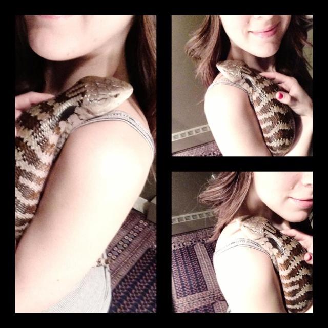 Should reptiles be kept as pets 65075_11