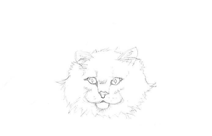 Galerie de Cat_Fawn Img00510