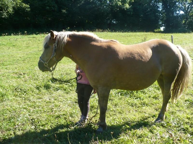 MELISSE - ONC typée Haflinger née en 2002  - adoptée en novembre 2013 par fannybis Chevau12