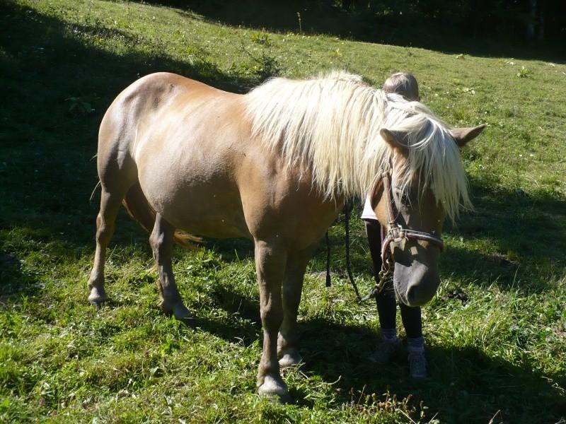 MELISSE - ONC typée Haflinger née en 2002  - adoptée en novembre 2013 par fannybis Chevau15